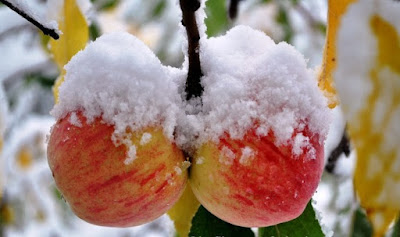 Himachal Pradesh- The Apple State