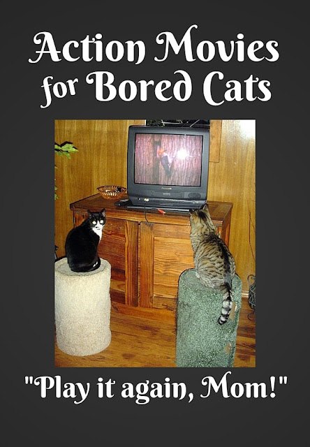 Action Movies for Bored Cats: How to keep your finicky felines entertained.