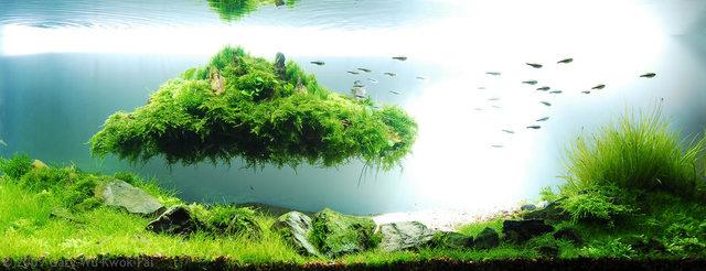 Bể thủy sinh phong cách Avatar - đá nổi lơ lửng