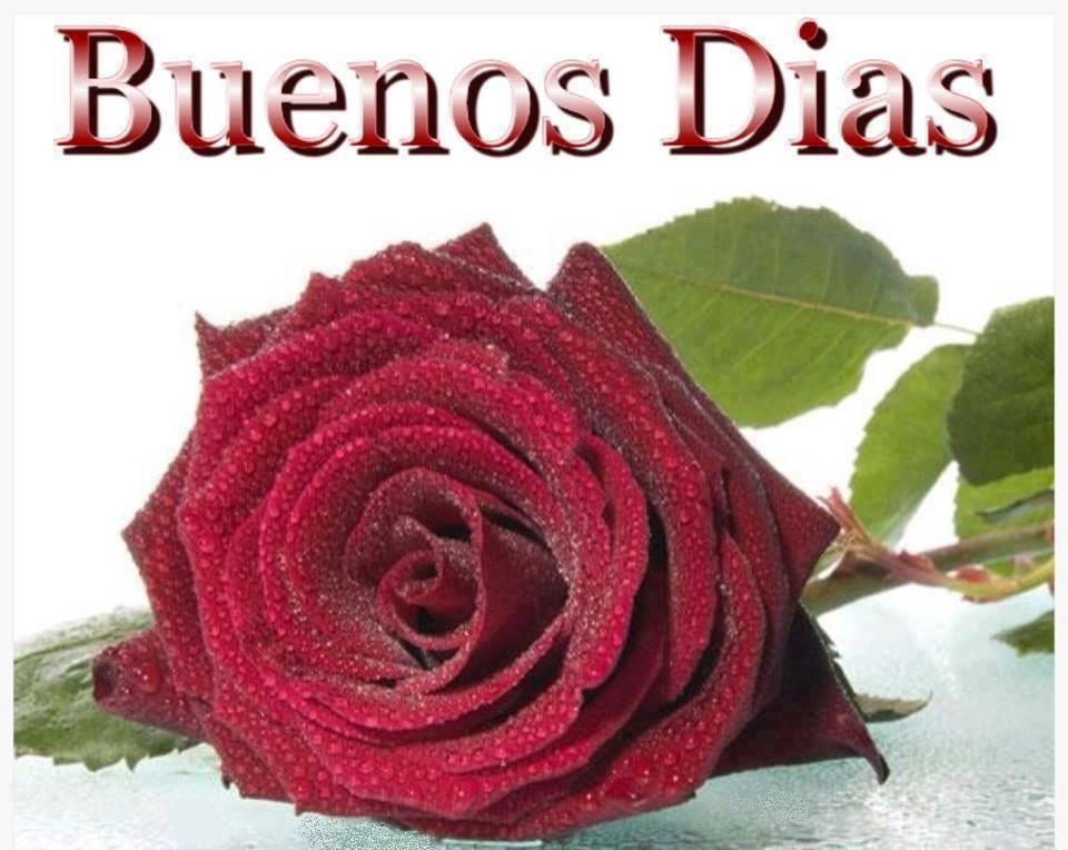 rosa roja Buenos Días