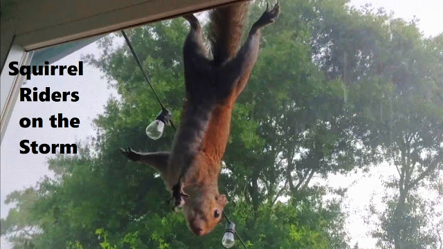 Squirrels Ride Out a Severe Storm in Florida
