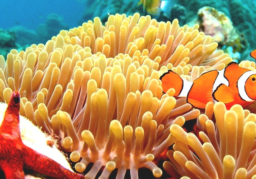 List Of Marine Aquarium Fish Species Orange Fish Names