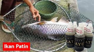 Testimoni Master Essen Katilayu Ikan Patin
