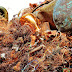 'Teveel recycling is een gevaar voor de circulaire economie '