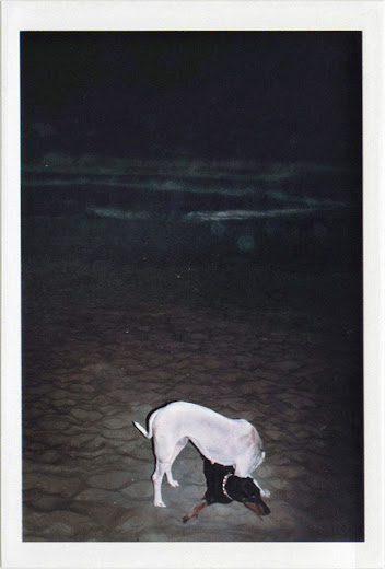 dirty photos - umbra - a night street photo of dogs making love in rethymno beach