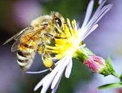 lebah dengan bunga.