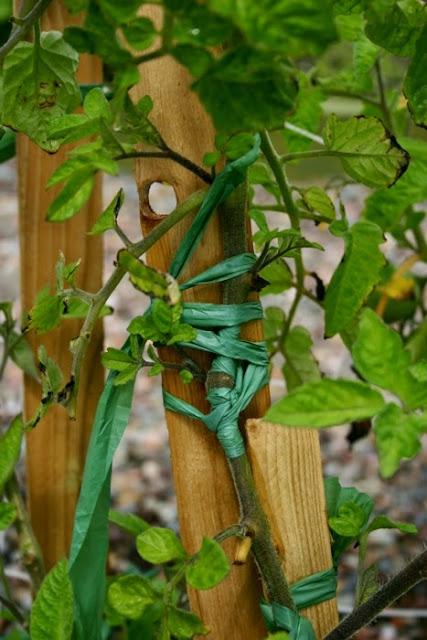 DIY pastic yarn PLARN for stem repair in garden