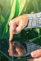 belanja online,online,pertanian,era digital,lmga agro