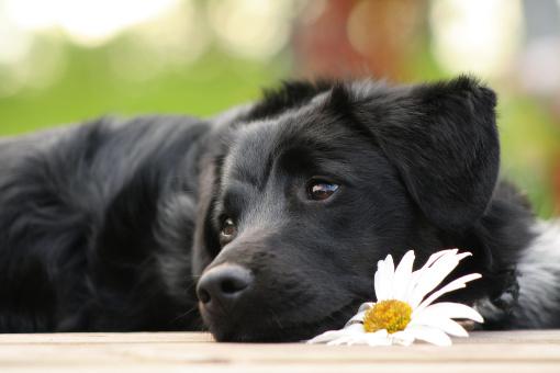 Jaka karma jest dla psa najlepsza?