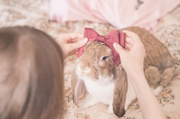 a girl tries on a bow tie on her rabbit