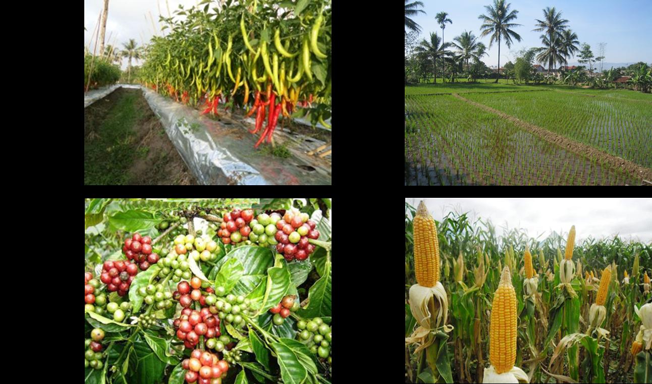 Mengerjakan Pr Soal Pilihan Pemanfaatan Sumber Daya Alam Pertanian