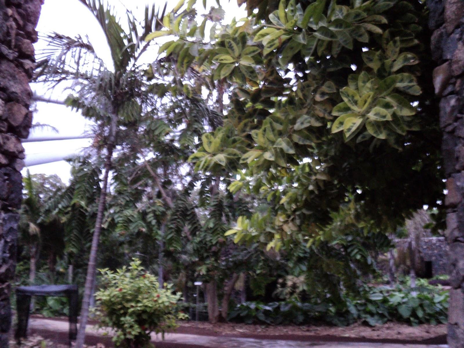 Playa paraiso 2014