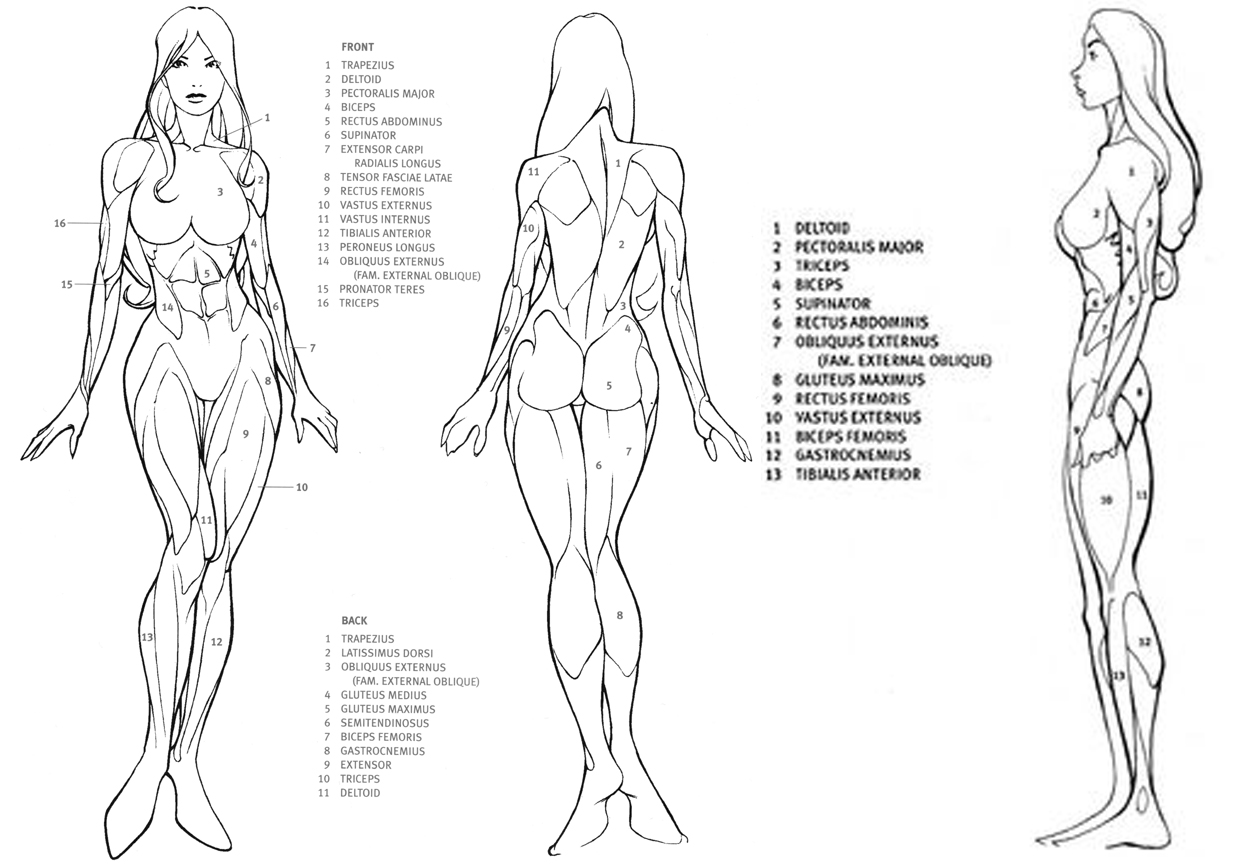Somniare Lilium: How to draw female body, body proportions