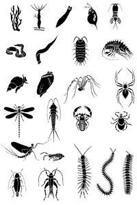 Anelídeos - Moluscos e Artrópodes