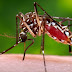 Zika Virus: Symptoms, Treatment And Prevention