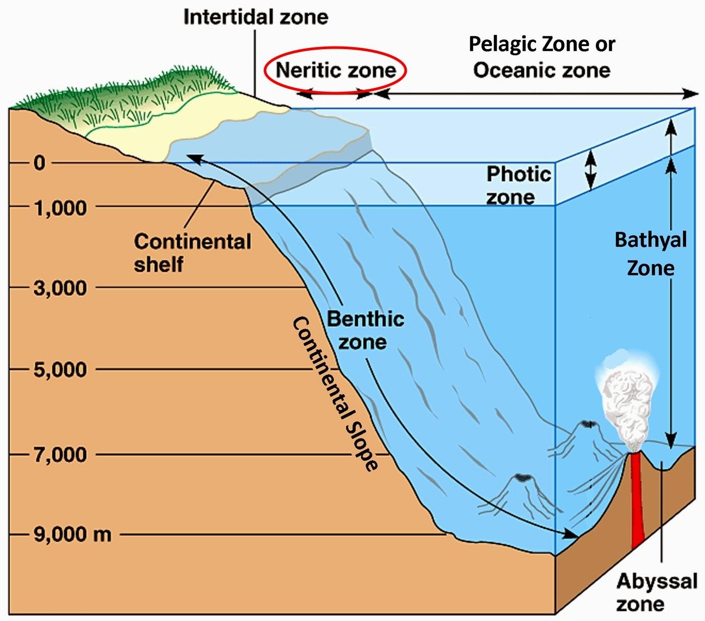 rain drop water cycle diagram ocean drop diagram