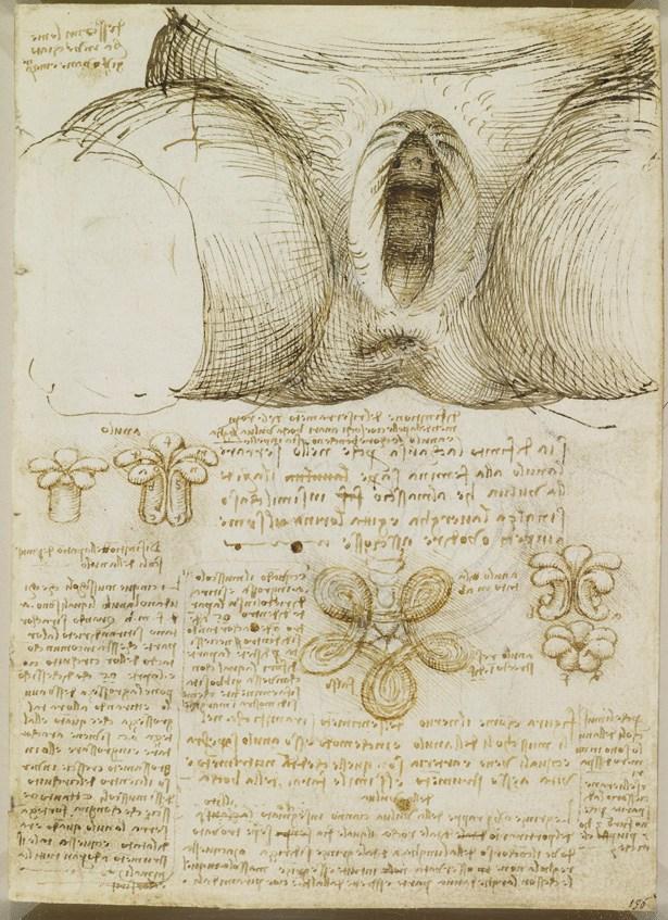 A Rare Glimpse of Leonardo da Vinci\u0027s Anatomical Drawings