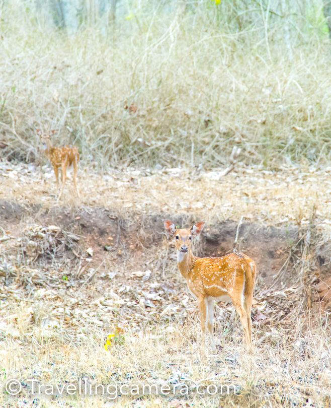 As usual, we were welcomed by spotted deer, monkeys, woodpeckers, peacocks and a lot of other birds in the forest.