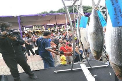 Ikan Bandeng Seukuran Bayi Ikut Meramaikan Tradisi Pasar Bandeng di Gresik