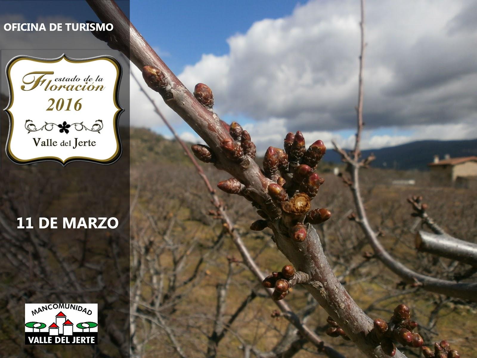 Estado de la floración a 11 de marzo 2016