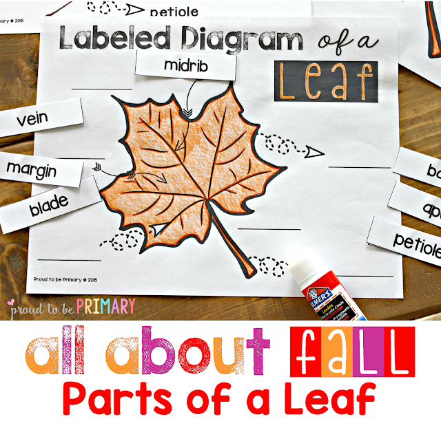 fall lesson plans - parts of a leaf