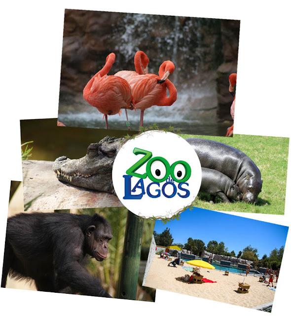 https://www.goodlife.com.pt/oferta/lisboa/Experiencias-Bilheteira-Parques-Tematicos/Exclusivo-Venha-conhecer-a-nova-cria-de-Hipopotamo-Pigmeu-ao-Zoo-de-Lagos-Bilhete-de-Adulto-ou/89974359/