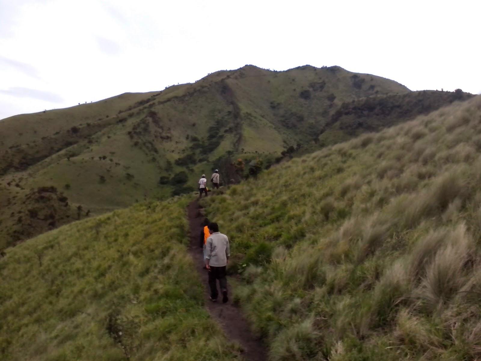 jalan menuju puncak merbabu