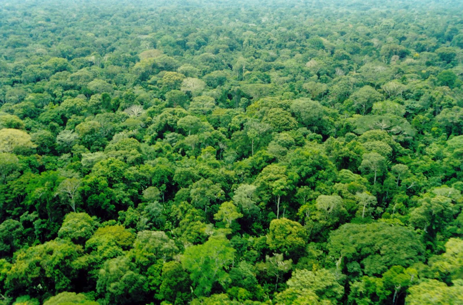 A Amazónia (Brasil) vai servir de palco para