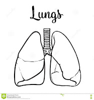 pulmones-colorear-infatil-molde