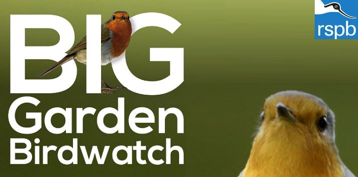 Image result for Big Bird watch 2019