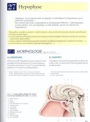 Télécharger Livre Gratuit Hypophyse pdf