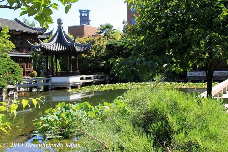 Descubriendo hojas el jard n chino lan su de portland for Chino el jardin