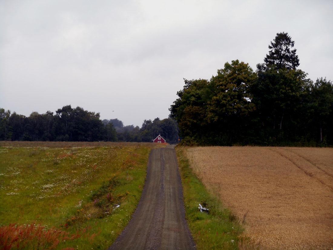 In MTB verso il bosco