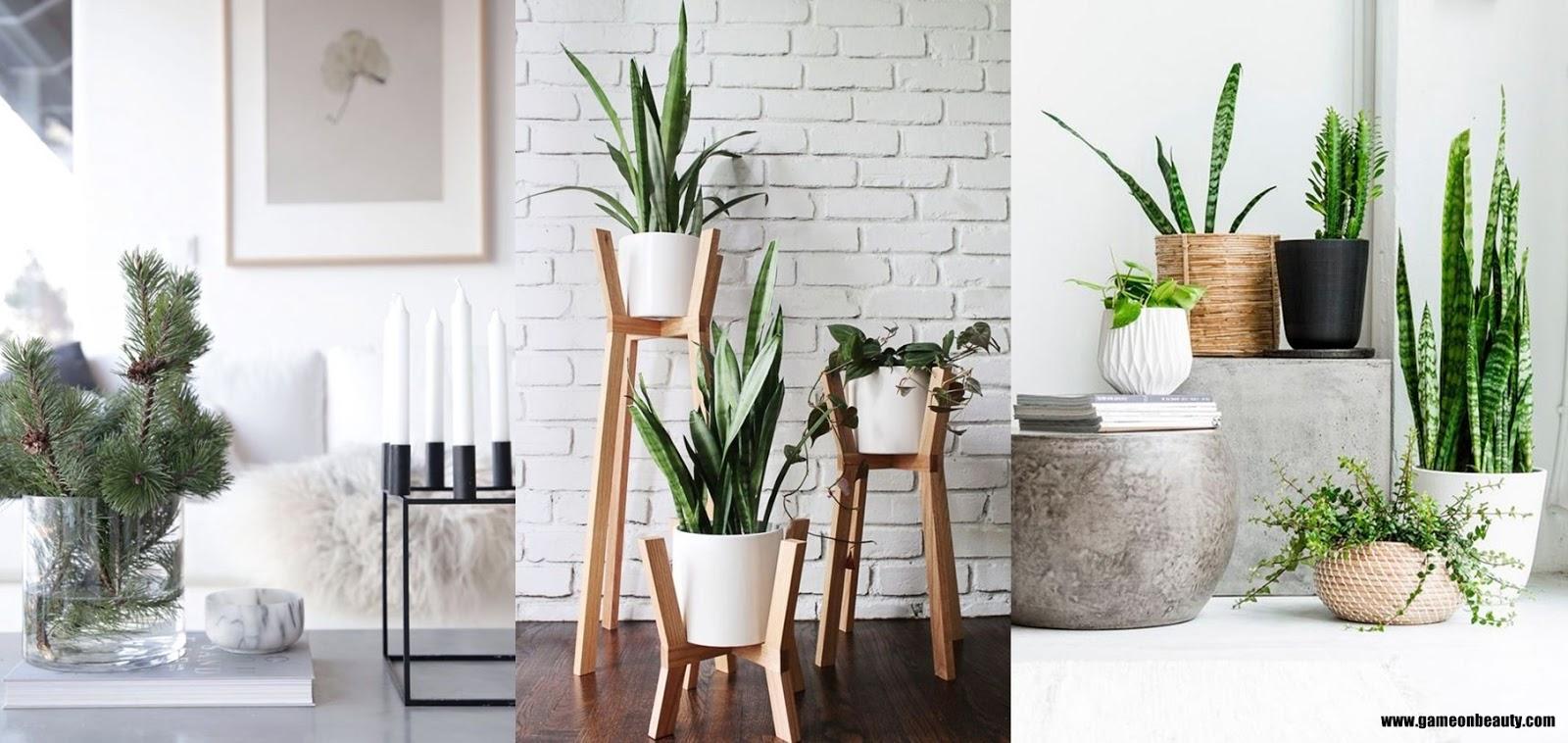 Decoração minimalista com plantas