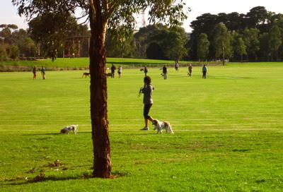 Elsternwick Park Dogs