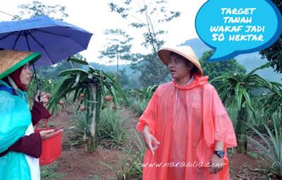 Wisata Petik Buah di Kebun Wakaf Indonesia Berdaya Subang, Yuk Jalanin Bareng!