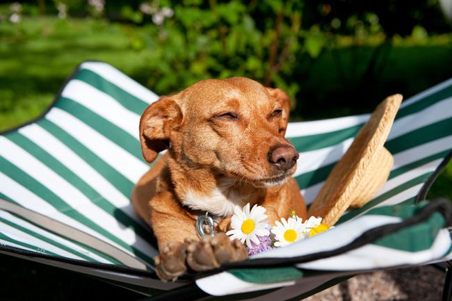 Jak pomóc psu przetrwać upał