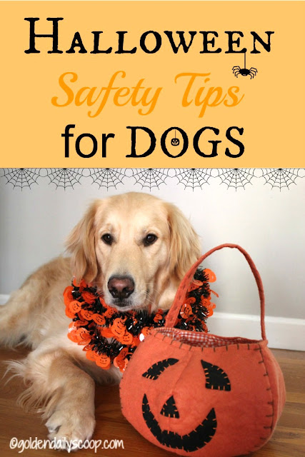 safety tips for dogs on Halloween
