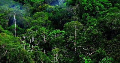 Fungsi, Jenis dan Stratifikasi Hutan