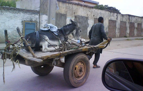 من صور الرفق بالحيوان