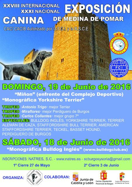 Especial Basset Hound en la Exposición de Medina de Pomar 1