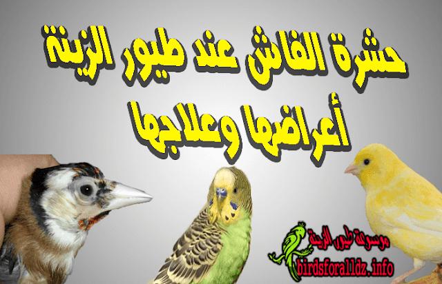 حشرة الفاش عند طيور الزينة أعراضها وعلاجها
