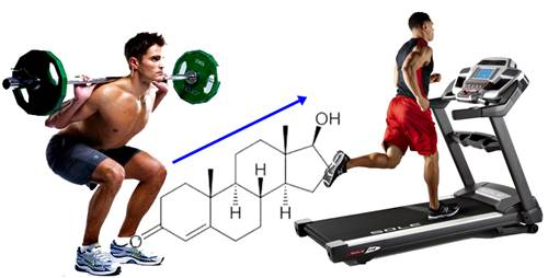 Combina tu rutina de pesas con el cardio para aumentar los niveles de testosterona