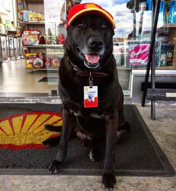 Perro obtiene una oportunidad trabajando en una gasolinera
