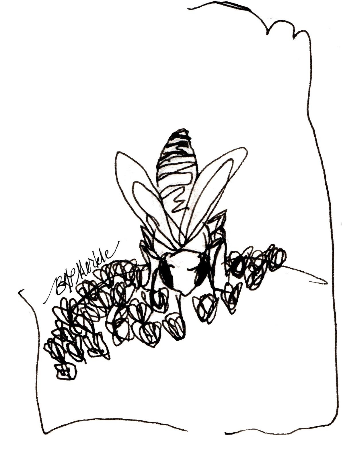 drawn to qu bec sketchbook snapshot buzz about bees and bee Lots of Pets human related pollination aside bees of all stripes pollinate a staggering proportion of the wild and domestic plants
