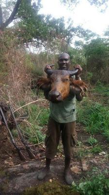 3 - Nigerian Hunter kills Something Very Strange in Edo State (See Photos)