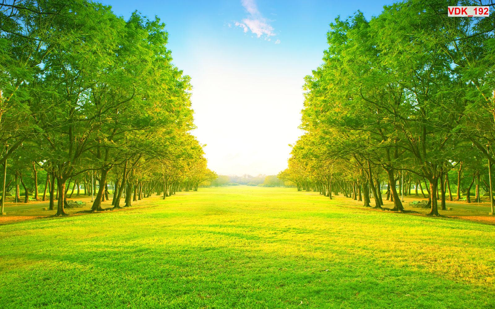 Tranh dán tường 3d rừng cây