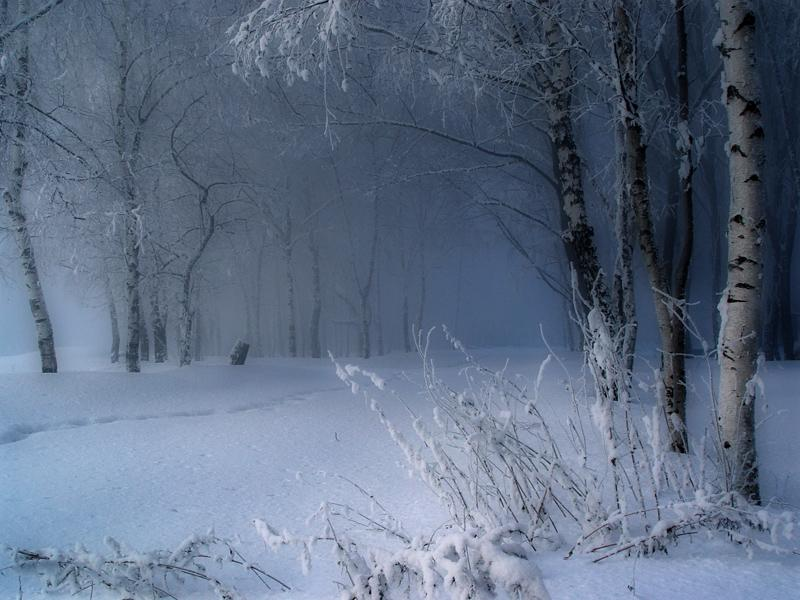woods forest winter scenery snow trees