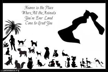 animal, dog, cat, pet, animal, inspiring quotes for animal lovers, petsnmore.org, heaven,