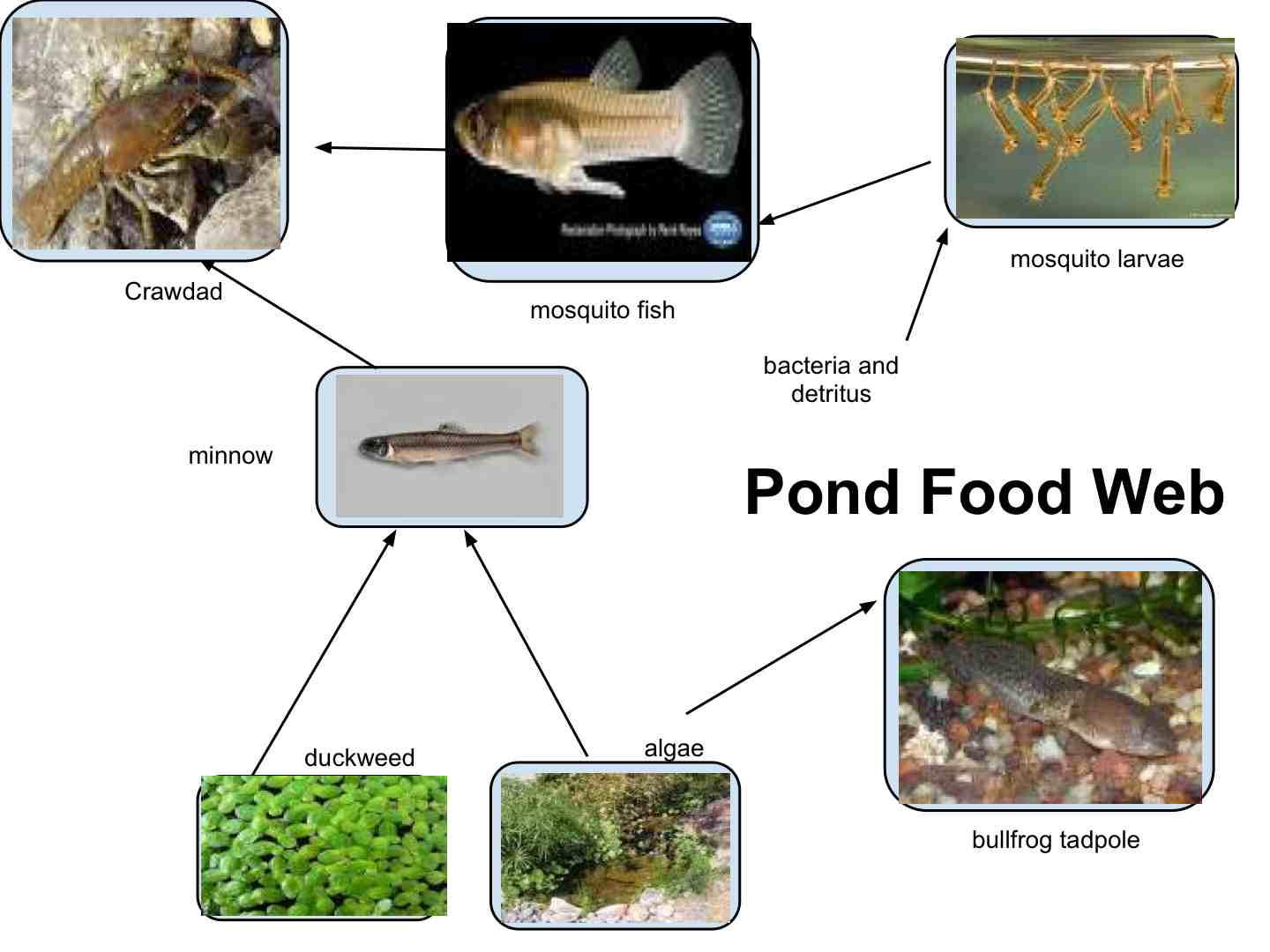 Stewart Family Newsletter Creating Your Own Pond